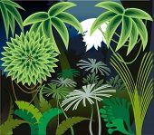 Rainforest Night
