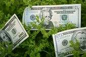 Dollar notes growing from a green plant, benefits growth metaphor poster