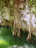 pic of cenote  - cenote lake in Riviera Maya jungle mayan Quintana Roo - JPG