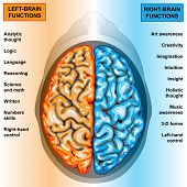 foto of cerebrum  - Illustration body part - JPG