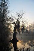 Bald Cypress - Okefenokee Swamp, Georgia
