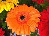 Bouquet Of Gerberas. Bright Orange, Red And Yellow Flowers Close-up. Oil Painting. Acrylic Painting. poster