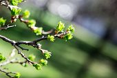 Spring Has Come. Delicate Young Spring Leaves.  A Symbol Of New Life, Hope, New Business poster