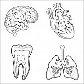 stock photo of bronchus  - Vector medical icons - JPG