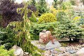 Coniferous garden with stones
