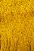 Raw, Unprocessed Silk Yarn From Yellow Cocoons Of The Silk Worm.