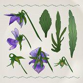 Botanical flowers vintage