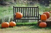 Shaker Bench and Pumpkins