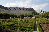 Rose Garden In Bamberg