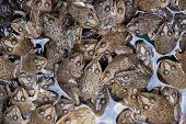 Thai frogs pattern