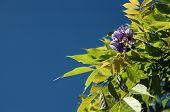Purple Flowers Blue Sky poster