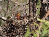 new baby birds