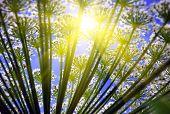 Summer Sun Through Flower