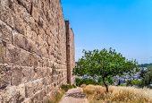 picture of fortified wall  - Olive tree near the wall surrounding the Old City of Jerusalem - JPG