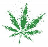 picture of cannabis  - Grunge cannabis green leaf   - JPG