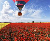 Balloon flight. Tourist, stunned the beauty of nature in scenic gondola of the balloon. Field of blo