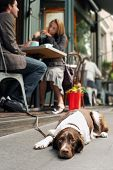 Blurred young couple at cafe with dog resting on sidewalk