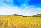 Chianti Region, Weinberge und Bäume Farm am Sunset Boulevard. Toskana, Italien