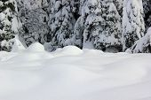 stock photo of blanket snow  - Deep snow drifts that covered the tops of the tree - JPG
