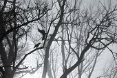 Horror theme background with fog and crows and tree branches