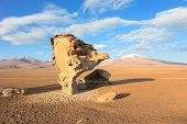 Arbol de piedra, Bolívia