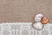Seashells On Lacy Cloth And Burlap