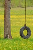 stock photo of tire swing  - Tire swing hanging from a white oak tree in a field of yellow wildflowers and grass - JPG