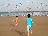 Boys Chasing Birds
