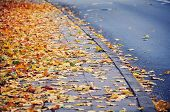 Yellow Leaves At The Street