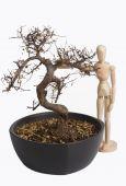 Holz-Modell mit Baum