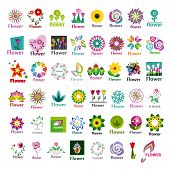 Large Collection Of Vector Floral Icons
