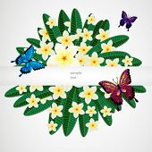 Floral design background. Plumeria flowers with butterflies.