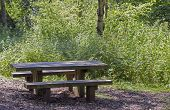 Wooden picnic bench in shady woodland