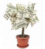 Money tree made of dollar bills, isolated on white background