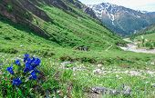 Flowers In The Alps In Summer