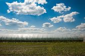 Green field under beautiful dark blue sky. Field of grass and perfect blue sky