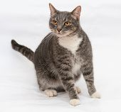 Gray Tabby Cat With Orange Eyes Stands On Gray