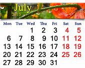 Calendar July Of 2015 With Drops Of Water On Red Lilies