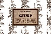 pic of nepeta  - Health and Nature Collection - JPG