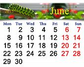 stock photo of chrysalis  - calendar for June of 2015 year with butterfly - JPG