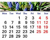 Calendar For May Of 2015 Year With Muscari