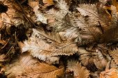 A bunch of dry leaves in autumn
