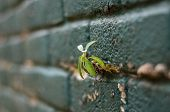 pic of grout  - small little plant growing on the grout between bricks