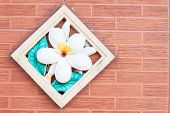 Brick Wall Background With Plumeria Decorated
