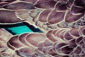 Mallard (anas Platyrhynchos) Duck Feathers Background Texture