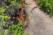 Rocky Landscape In The Seychelles With Plants