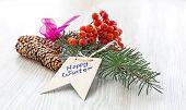 Rowan tree bunch and Christmas tree branch