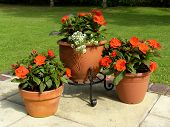 stock photo of flower pot  - Three Patio Pots - JPG