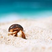 pic of hermit crab  - Hermit crab on beach at Seychelles - JPG