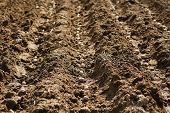 stock photo of cultivation  - Cultivation of potatoes on rows into plowed soil - JPG